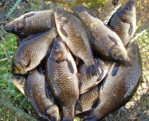 когда клюет рыба в апреле
