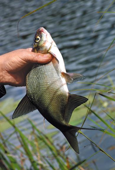 Рыбалка на леща в ноябре