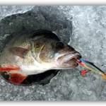 Зимняя рыбалка на окуня на Братском водохранилище