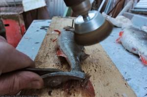 Как быстро и качественно почистить окуня от чешуи
