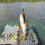 Самые уловистые воблеры для трофейной рыбалки