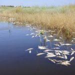 Причину массовой гибели рыбы в реке Оскол выясняют в Белгородской области