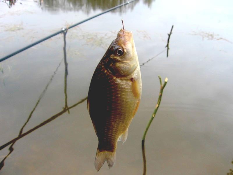 рыбалка на карася весной май